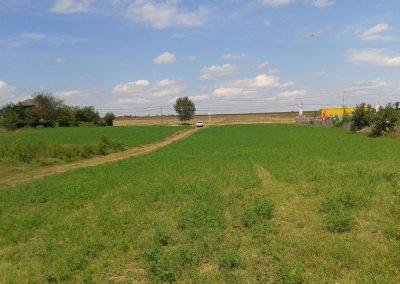 podu iloaiei Wertykl-Proiect1
